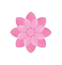pink flower garden decoration vector image vector image