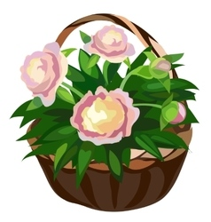 Bouquet of pink flowers in straw basket vector image