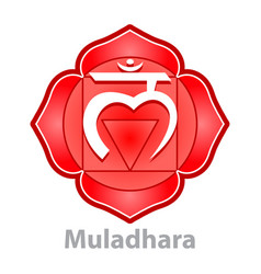 chakra muladhara isolated on white vector image