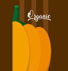 Organic pumpking vegetable vector