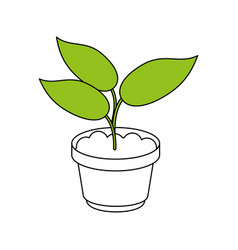 Plant in pot design vector