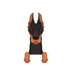 Portrait of dobermann with paws dog hanging on vector