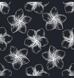 Seamless pattern with hand drawn chalk plumeria vector