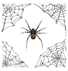 Spiderweb Big spider web Scary spider of web vector
