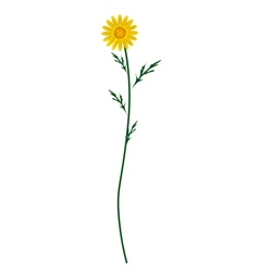 Yellow Daisy Blossom on A White Background vector