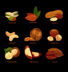 Nuts collection with names isolated on black vector
