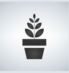 plant pot icon growing concept isolated on white vector image