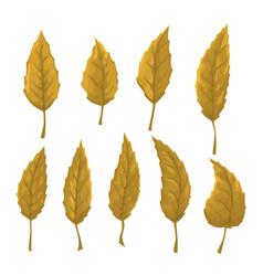set of orange leaves on a white background vector image