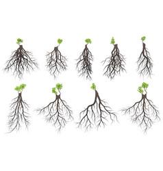Set of tree roots vector