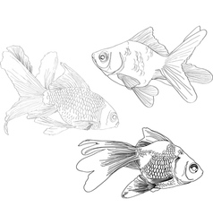 Hand drawing gold fishes vector image