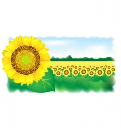 Sunflower and field vector illustration vector