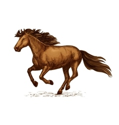 Arabian brown horse running on races sketch vector image vector image