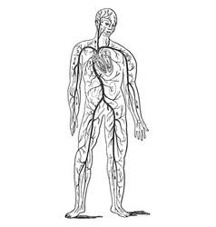 Circulatory vintage vector