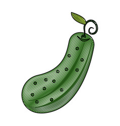 pickle vegetable isolated vector image