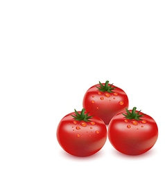 tomato on white background vector image