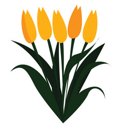 yellow tulip flowers in spring print on white vector image