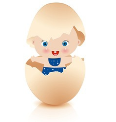 baby boy in broken egg vector image