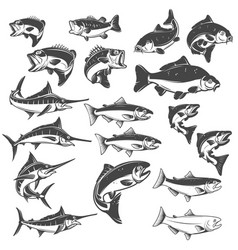 Fish on white background carp bass fish trout vector