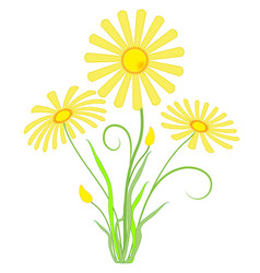 garden yellow flowers marigolds vector image