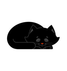 Sleeping cat black isolated kitten be asleep vector