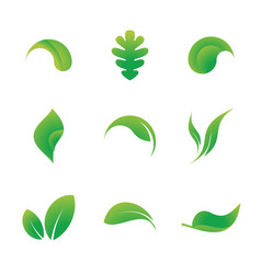 leaf icons solated on a white background vector image vector image