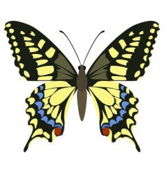 papilio machaon vector image