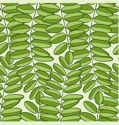 seamless pattern with acacia leaves spring vector image