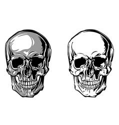 Skull anatomy front vector