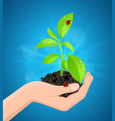 green plant in hand vector image
