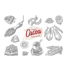 Engraving cocoa elements set vector