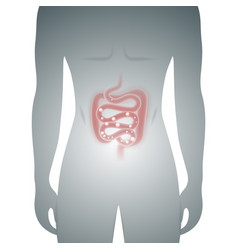 male silhouette with sick intestine medical vector image