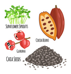 Vegetarian superfood healthy vegetable eco food vector