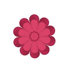 gerbera flower spring ornate vector image