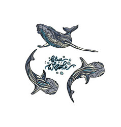 blue whales vector image