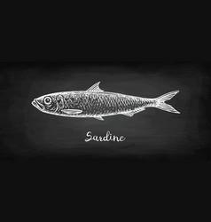 Chalk sketch sardine vector