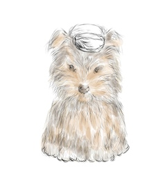 Male teacup yorkie vector