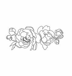 peony line drawing flower line art peonies vector image