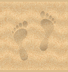 sand of the beach vector image