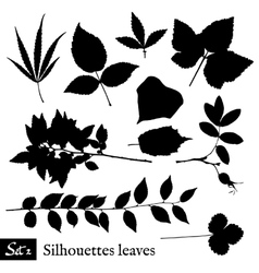Set of Leaf Silhouettes Isolated on white vector image vector image