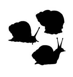 snail silhouette black white icon vector image