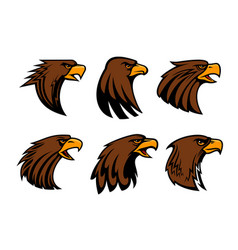 sport team eagle or hawk bird head vecor mascot vector image