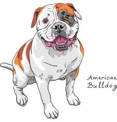 sketch dog American Bulldog breed vector image vector image