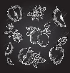 Hand drawn apples vector