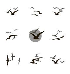 set of seagulls vector image