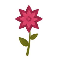 flower stem leaves nature vector image vector image