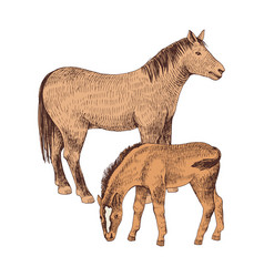hand drawn horse and foal farm animals familie vector image