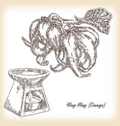 plant ylang-ylang cananga oil vector image