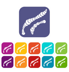 Spiral bacteria icons set vector