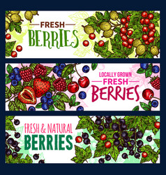 Berry with leaf banner of wild and garden fruit vector