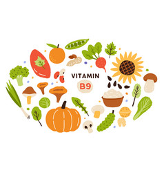 collection vitamin b9 sources food enriched vector image